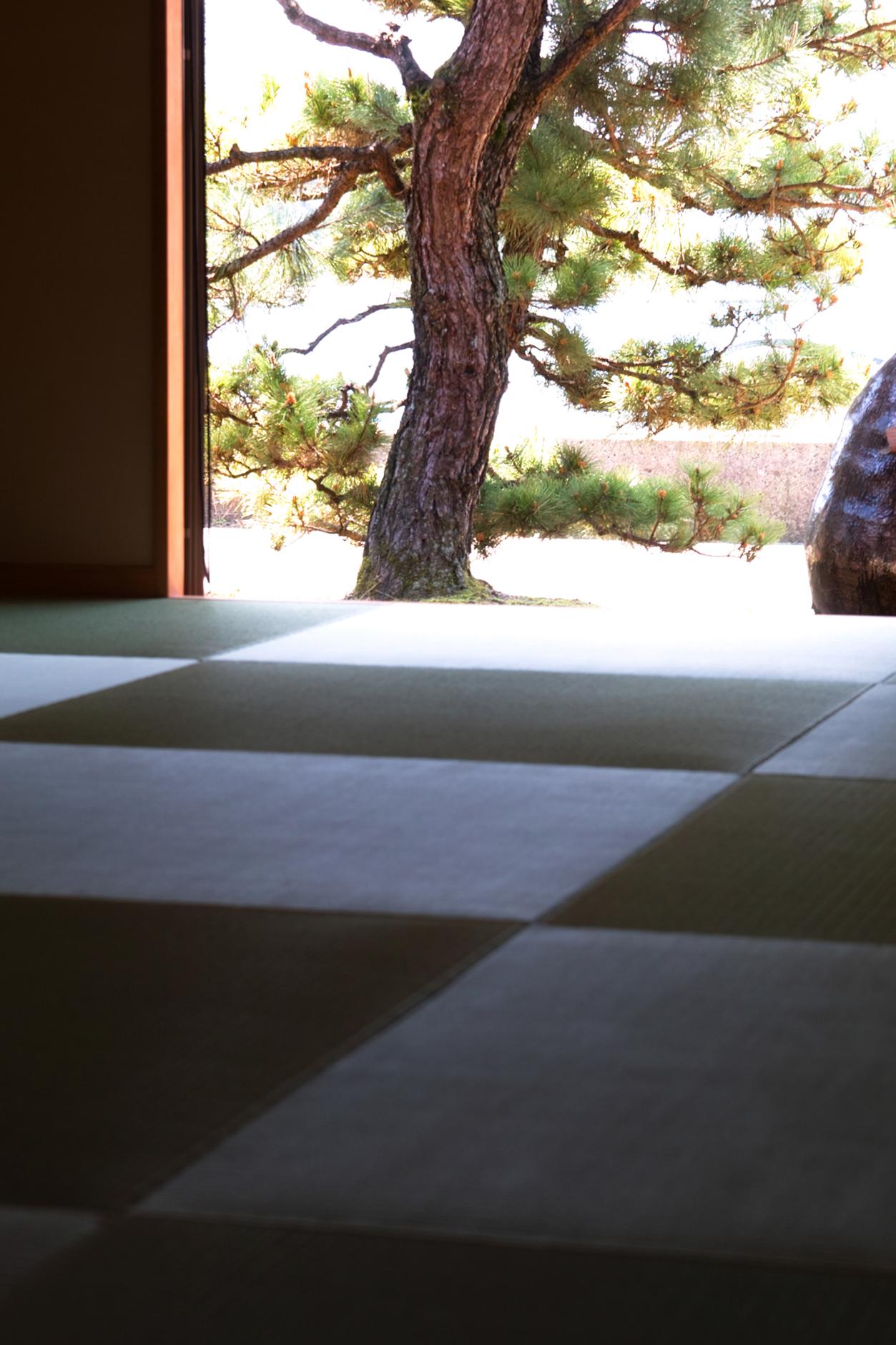 飯尾醸造さんの縁なし畳(琉球畳)